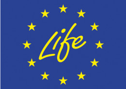 life official logo